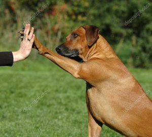 depositphotos_20793491-stock-photo-dog-pressing-his-paw-against